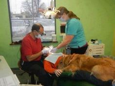 dog comforts dental patient